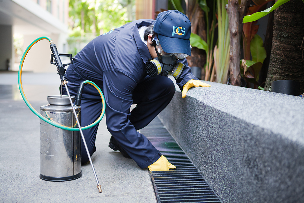 Get rid of pests through pest control services