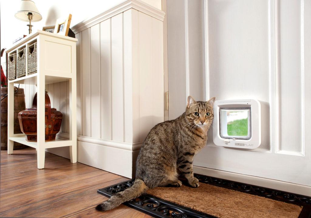 cat flap in glass door